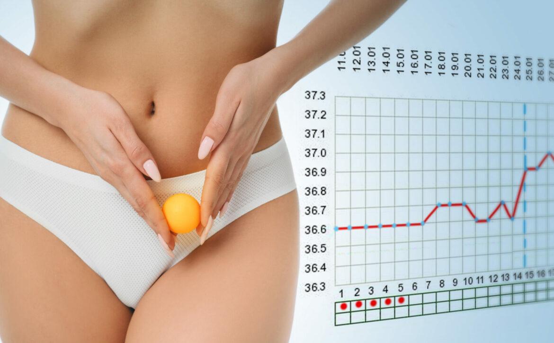 woman showing ovulation process holding near ovary ball like ovum. on the background basal body temperature chart
